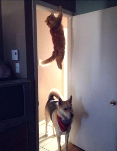 Man sieht eine Katze, die sich zwar offensichtlich versteckt, aber trotzdem nicht aufgeflogen ist