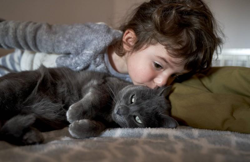 Eine Katze möchte keinen Kuss von dir aufgedrückt bekommen