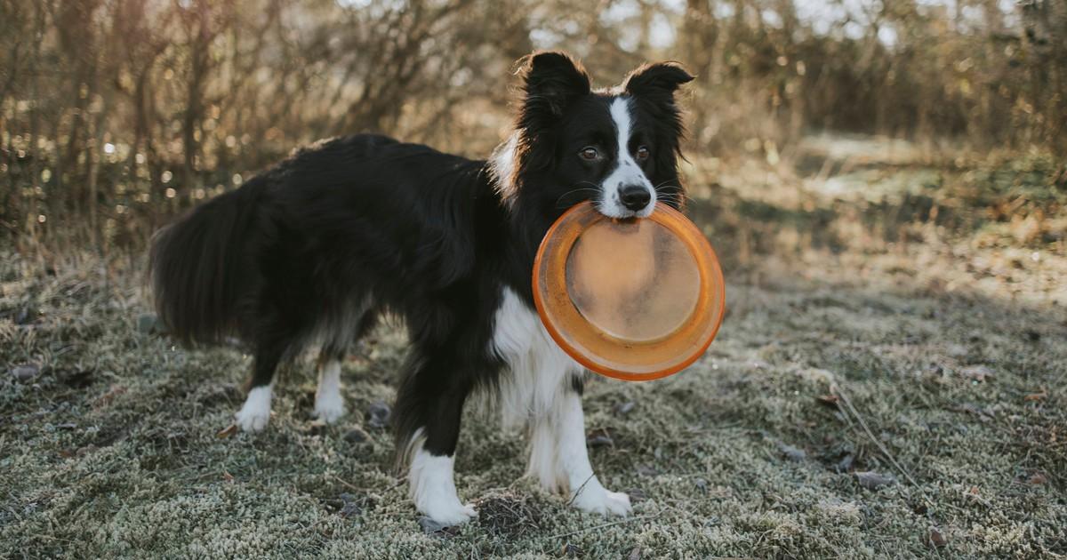 Wie viel Bewegung/Auslauf am Tag braucht ein Hund wirklich?