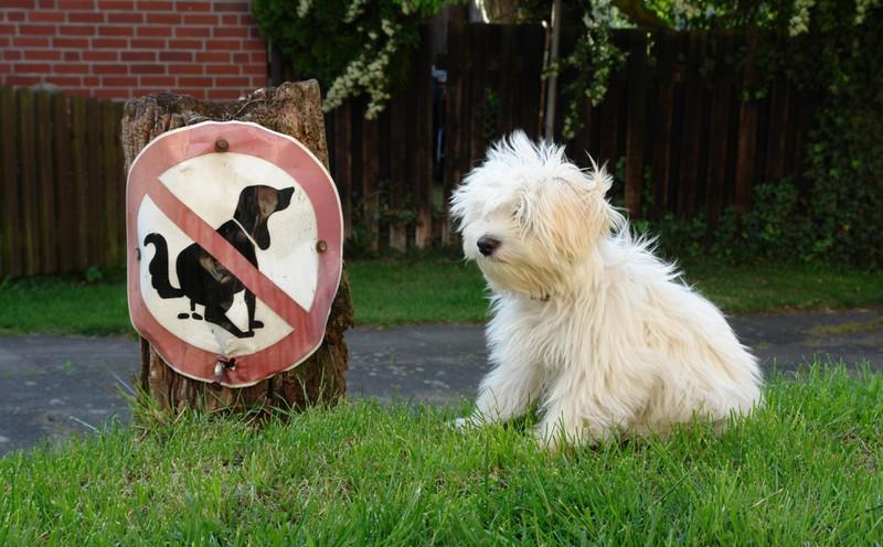 Ein Hund, der gerade sein Geschäft erledigen will