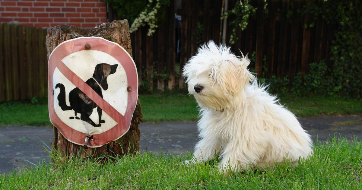 Durchfall bei Hunden: Was sind die Gründe und was kann man tun?