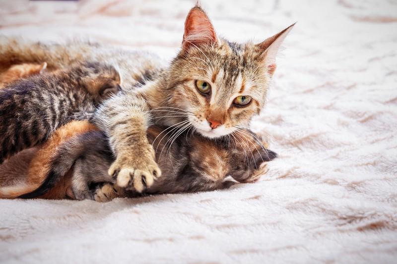 Junge Katzenbabys sind besonders gefährdet.