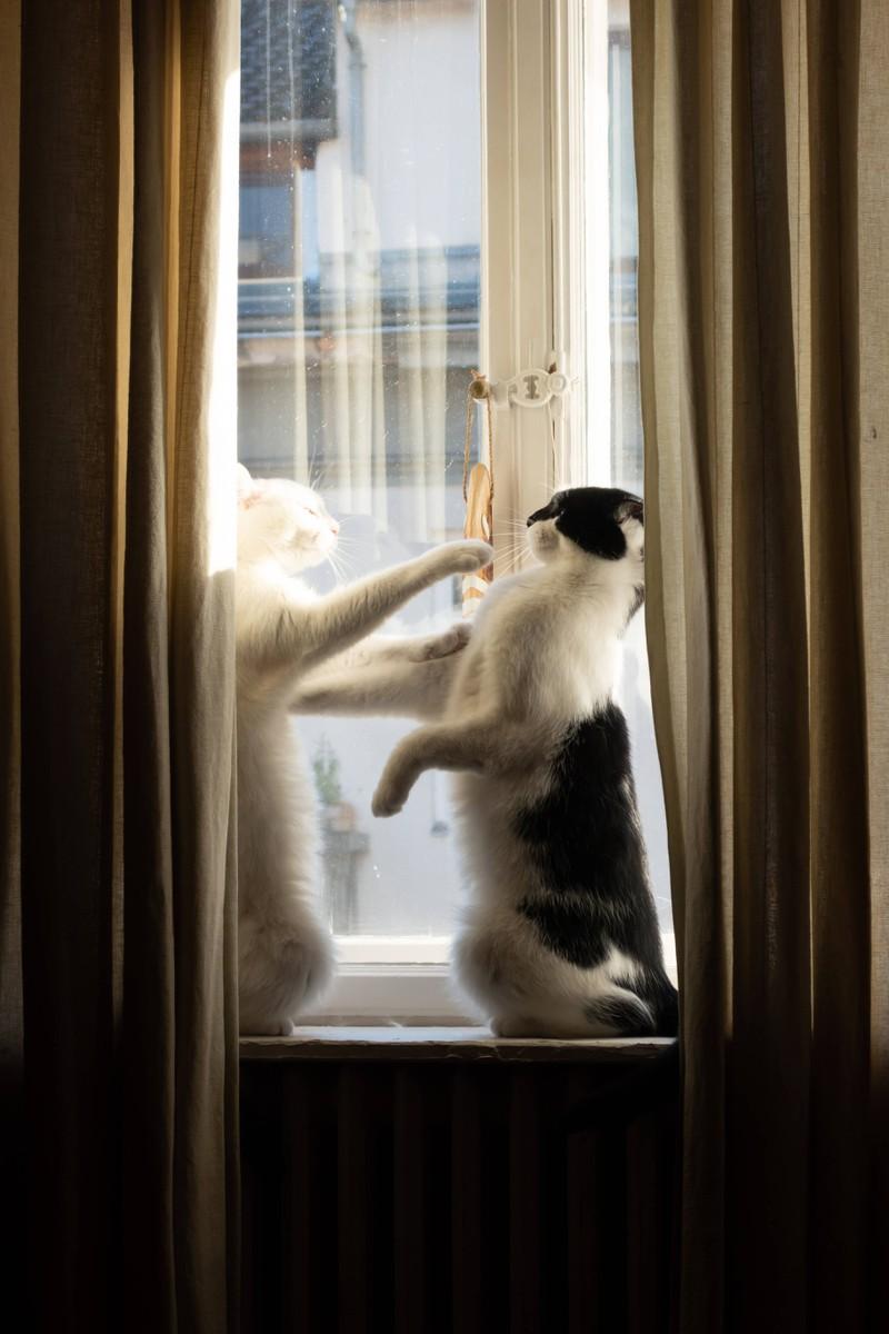 Katzenschnupfen kann unterschiedliche Übertragungswege haben