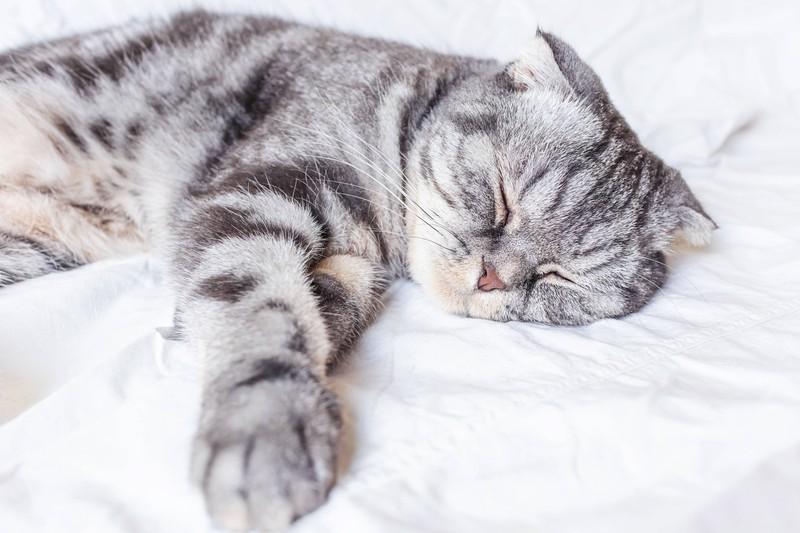 Mit deiner fürsorglichen Art, wird deine Katze schnell wieder gesund werden.