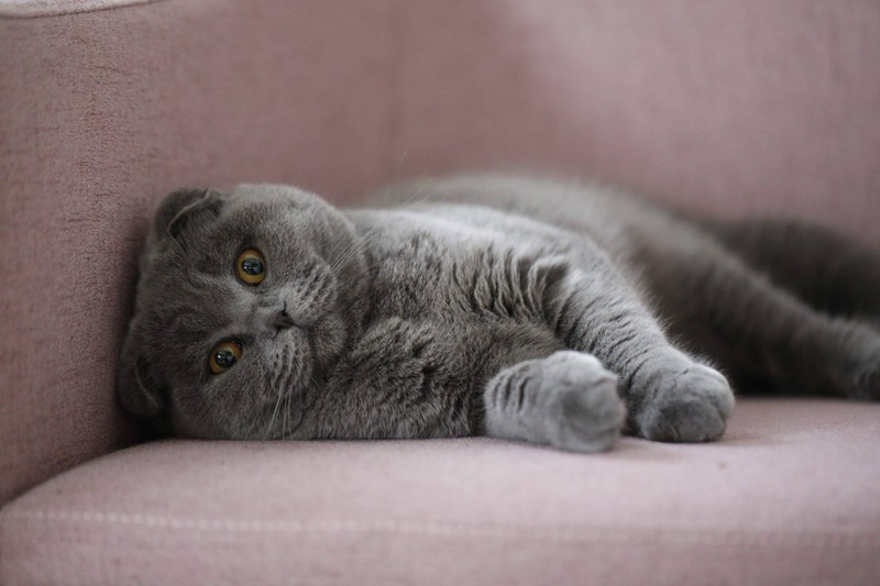 Wenn eine Katze niest, muss sie beobachtet werden