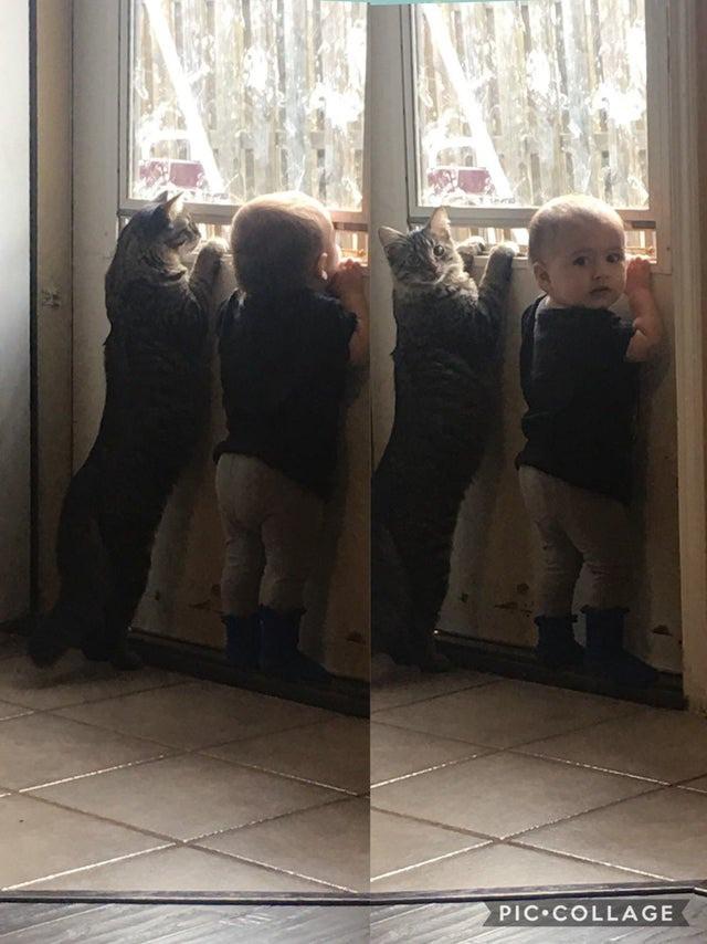 Die Katze und ihr menschliches Baby wirken wie die besten Freunde.