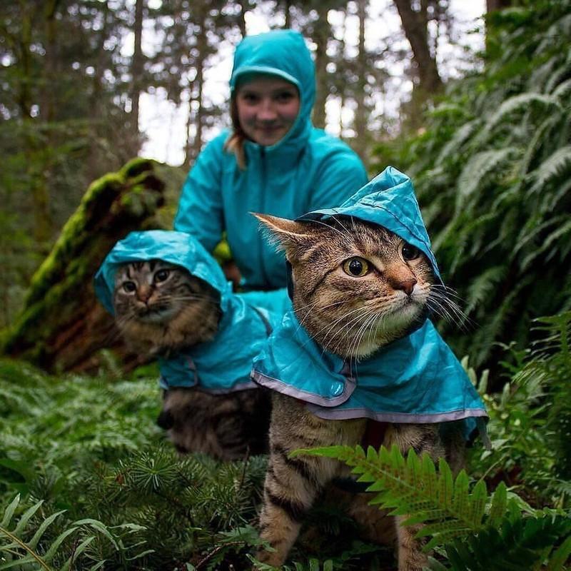 Diese zwei Katzen haben genau die gleiche Regenjacke wie ihr Frauchen.