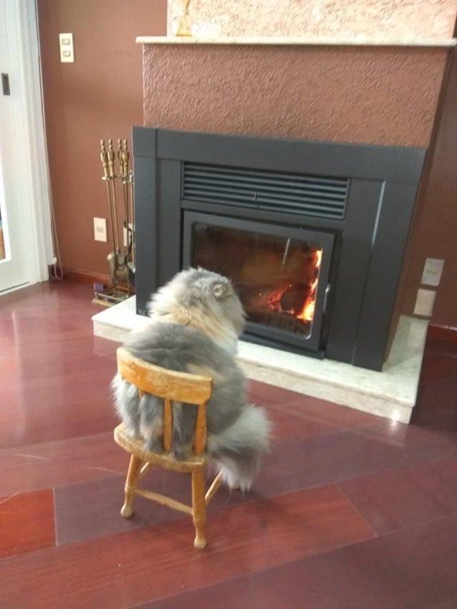 Eine Katze sitzt wie ein Mensch vor dem Feuer am Kamin.