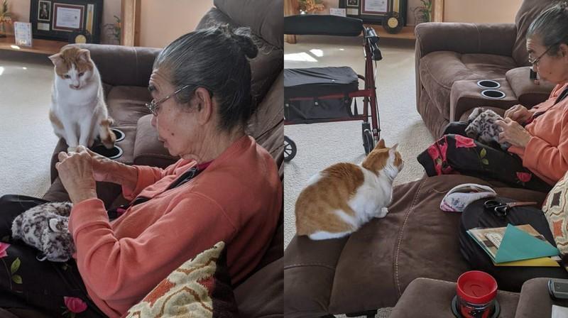 Eine Katze wartet geduldig darauf, dass die Oma ihr Spielzeug repariert.