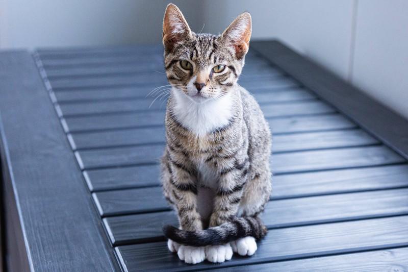 Katzen sind dankbare Tiere, wenn man sie gut behandelt nach ihrer Adoption.