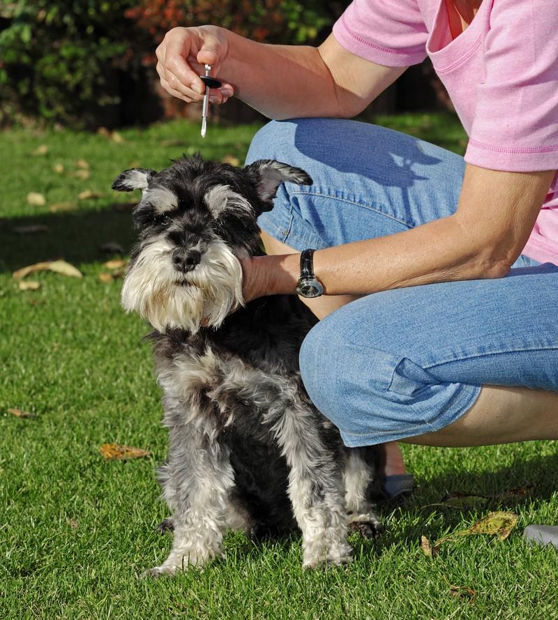 In bestimmten Regionen ist die Wahrscheinlichkeit höher, dass Hunde von einer Zecke gebissen werden.