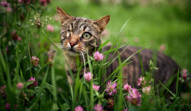 Katzen treiben sich gerne in hohen Gräsern herum, wo allerdings häufig Zecken leben.