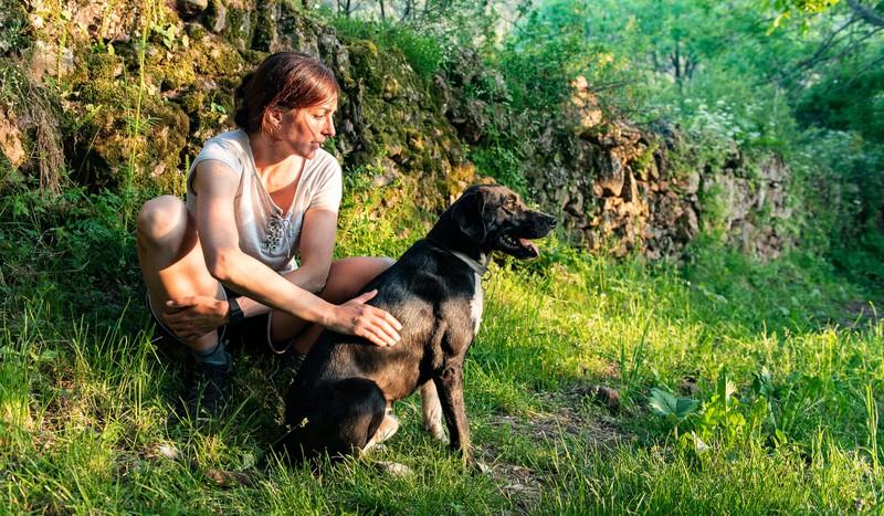 Sollte der Hund im Wald schon einmal von einer Zecke gebissen worden sein, lohnt es sich, sich über Präparate gegen Zecken zu informieren.