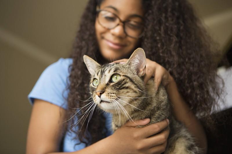 Wenn deine Katzen von draußen wieder in die Wohnung kommt, solltest du sie nach Zecken untersuchen.