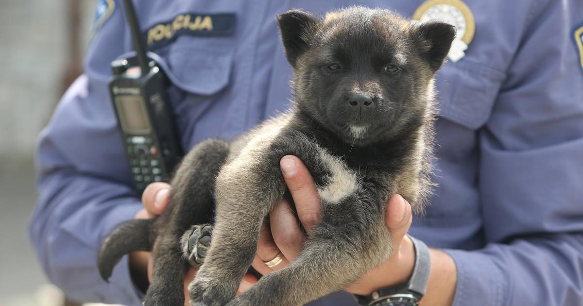 Polizist rettet süßen Hundewelpen - und schenkt ihm ein neues Zuhause