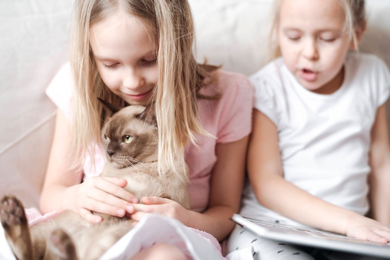 Das Familienleben wird meistens schöner, wenn Katzen ihre lustigen Momente zeigen.