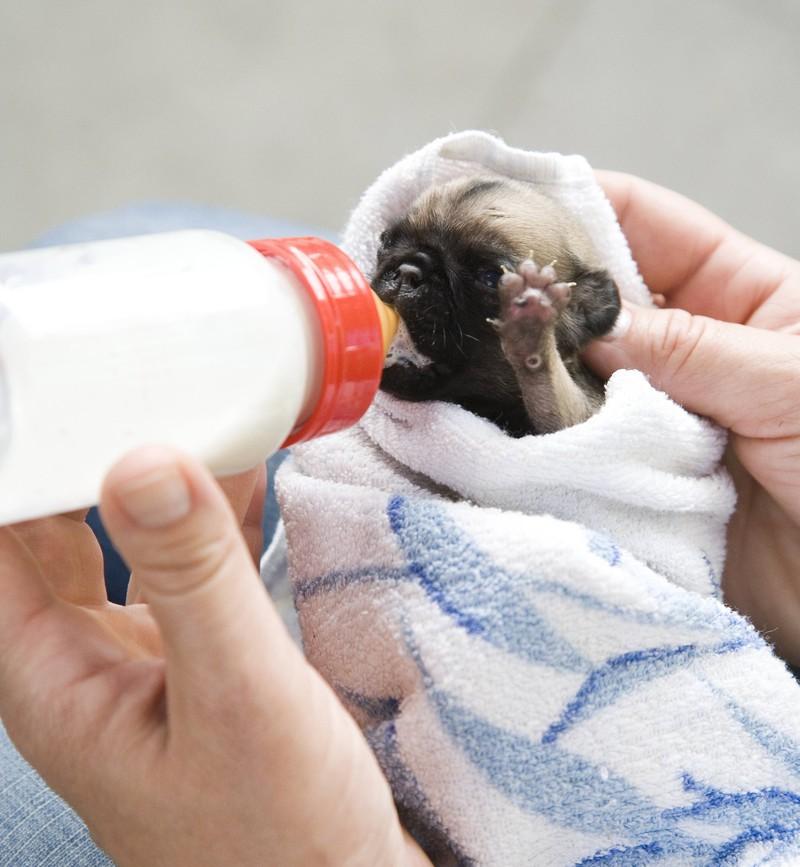 Der Mann wickelt den Hundewelpen in ein Tuch und gibt ihm etwas Wasser und Futter, um danach die Tierrettungsorganisation zu kontaktieren