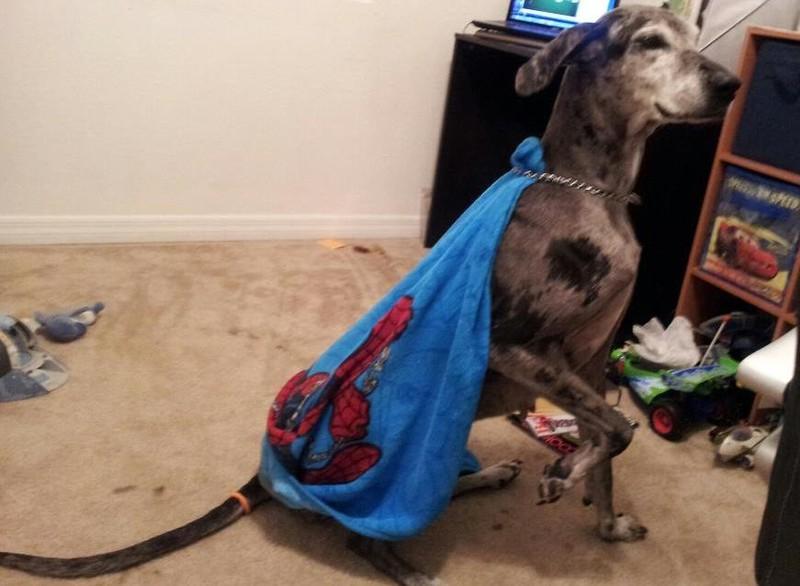 Hunde, die in einem Haushalt mit Kindern wohnen, werden auch mal zu einem Superhelden umfunktioniert.