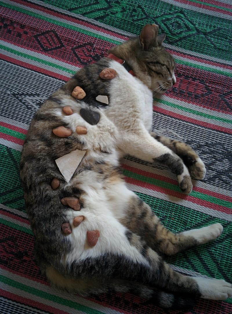 Katzen brauchen bei Kindern oft eine wahnsinnige Geduld.
