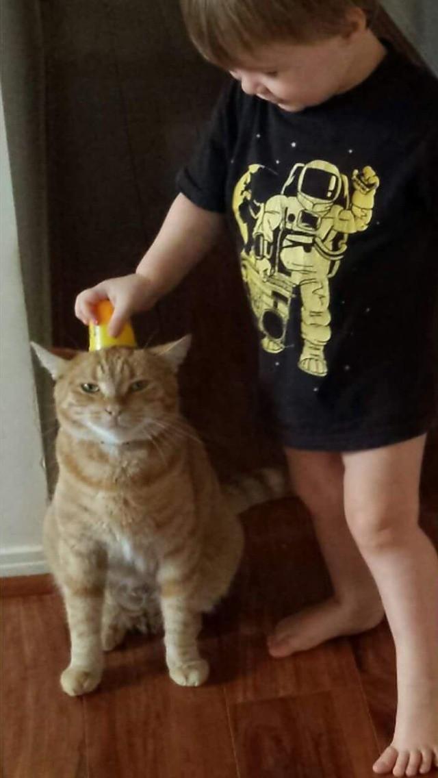 Kinder und Katzen verstehen sich oft sehr gut, doch die Tiere müssen einiges aushalten können!