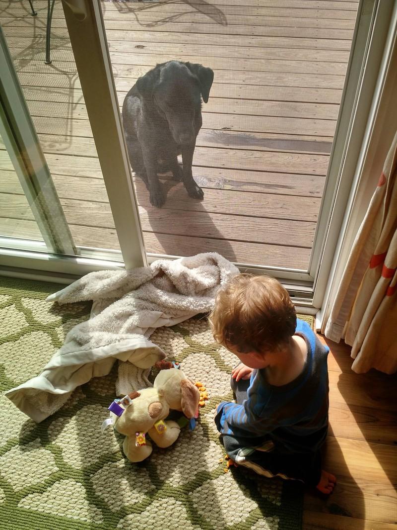 Wenn es ums Essen geht, verstehen Hunde allerdings keinen Spaß mehr.