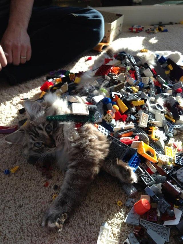 Wenn Katzen und Lego in einem Haus sind, kümmern sich die Kleinen darum, dass beides miteinander kombiniert wird