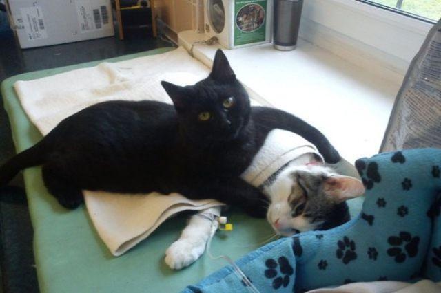 Eine Katze wurde gerettet und sorgt sich nun um andere dankbare Katzen.