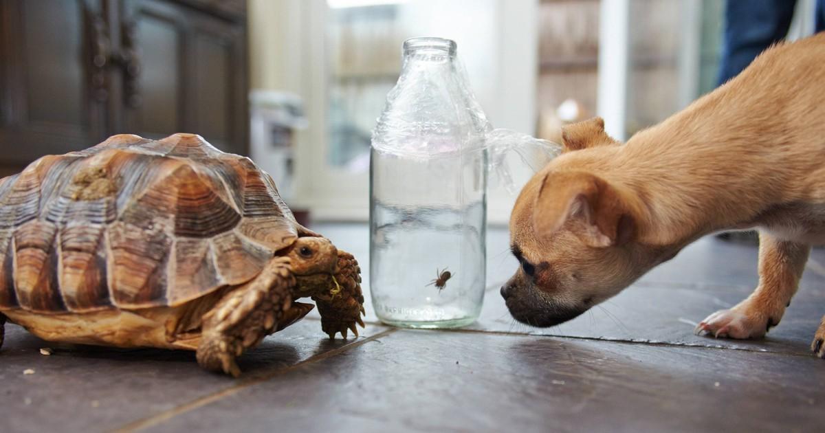 Besondere Freundschaft: Hund und Schildkröte begeistern das Netz