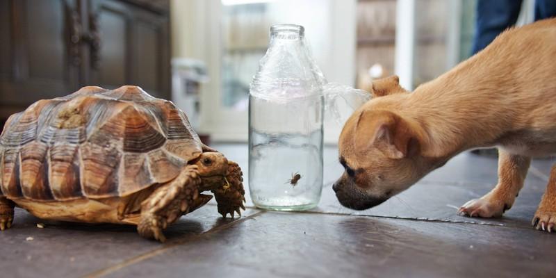 Ein Hund und eine Schildkröte sind sehr unterschiedliche Tiere