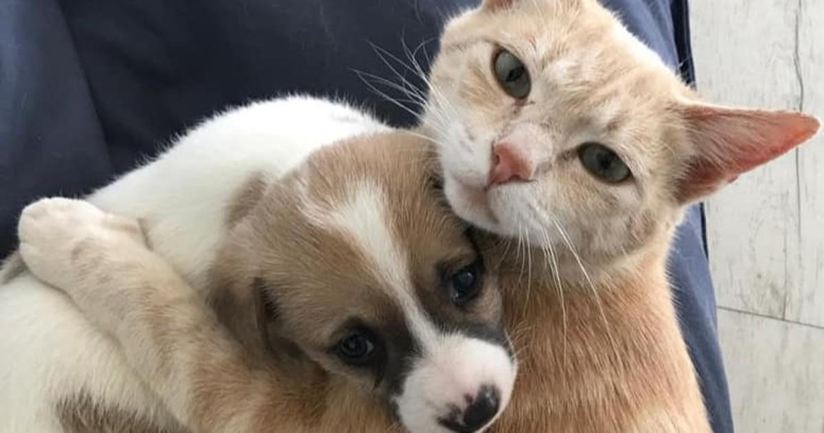 Adoption im Tierreich: Katze kümmert sich um Hundewelpen
