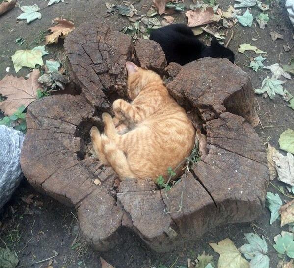 Eine Katze schläft in einem Baum.