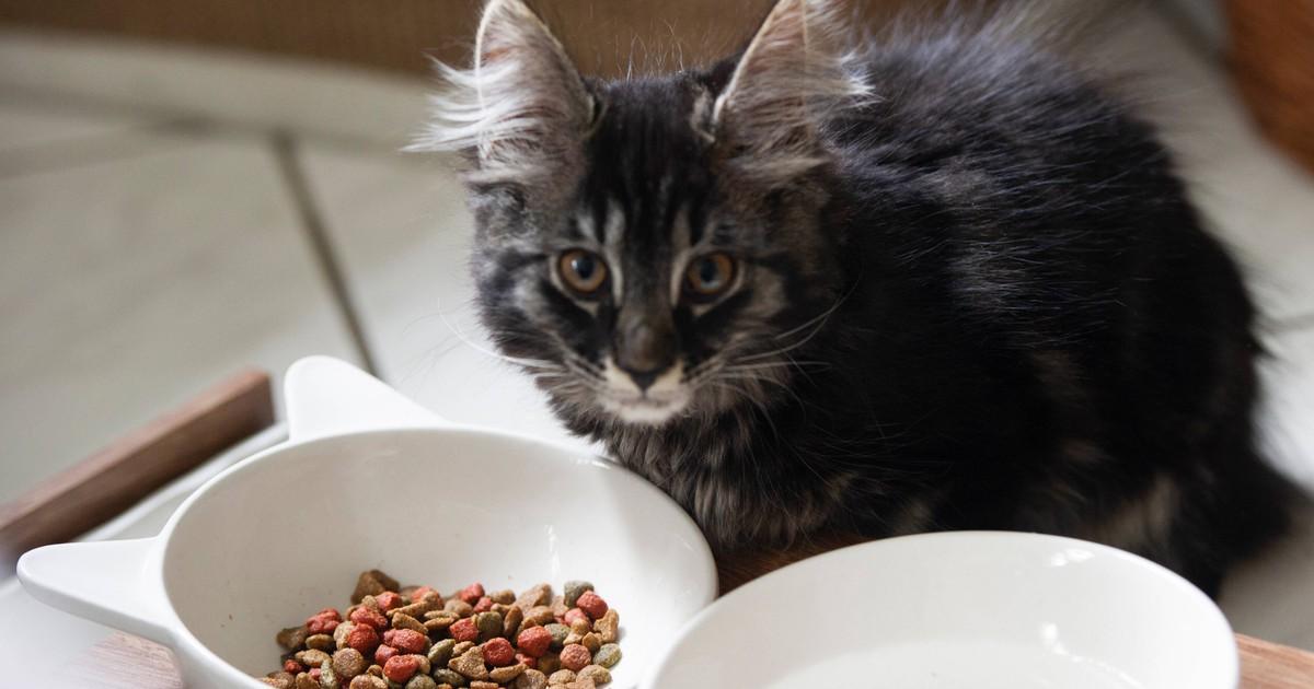 Im Tierheim: Hund und Baby-Katze pflegen sich gegenseitig gesund