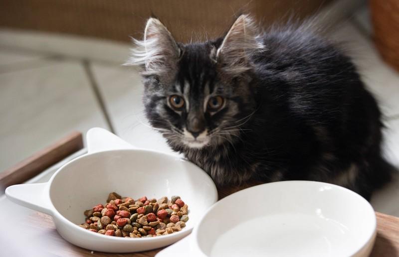 Das 9 Wochen alte Katzenbaby kam in der Tierschutzstation an und wird gesund gepflegt.