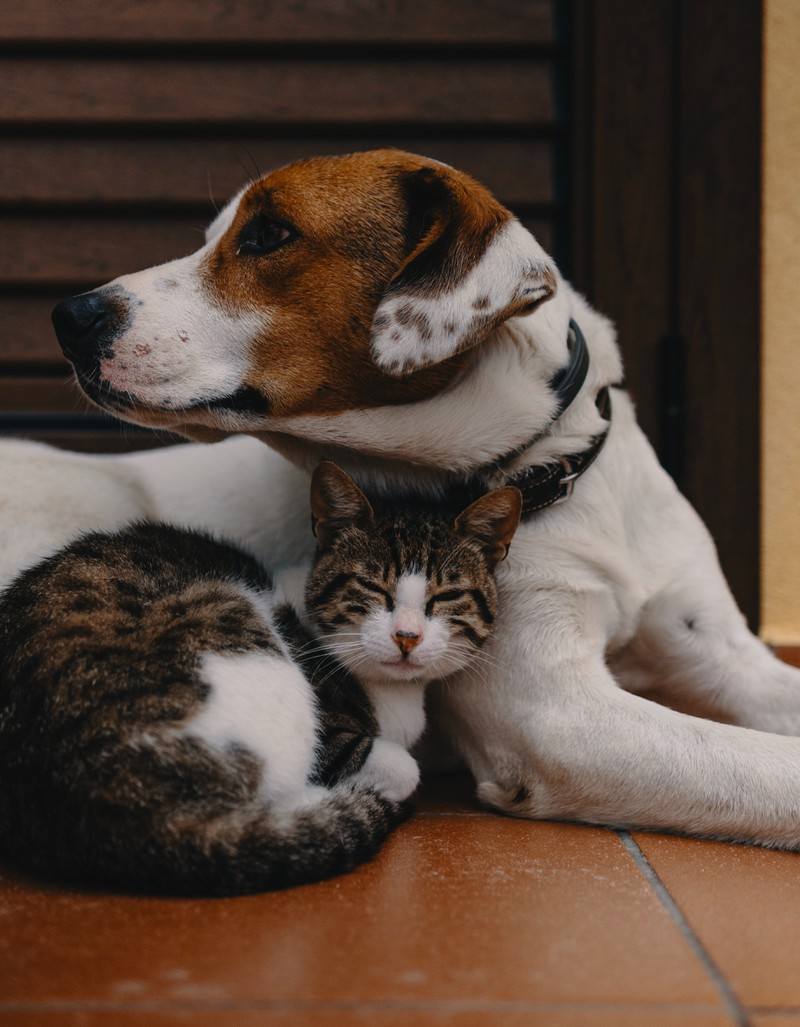 Die Geschichte von dem kleinen Katzen-Baby, das auf einen Hund trifft, beginnt.