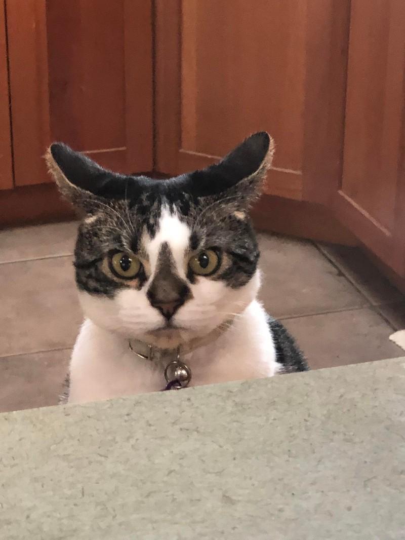 Eine Katze guckt sehr streng, aber trotzdem goldig.