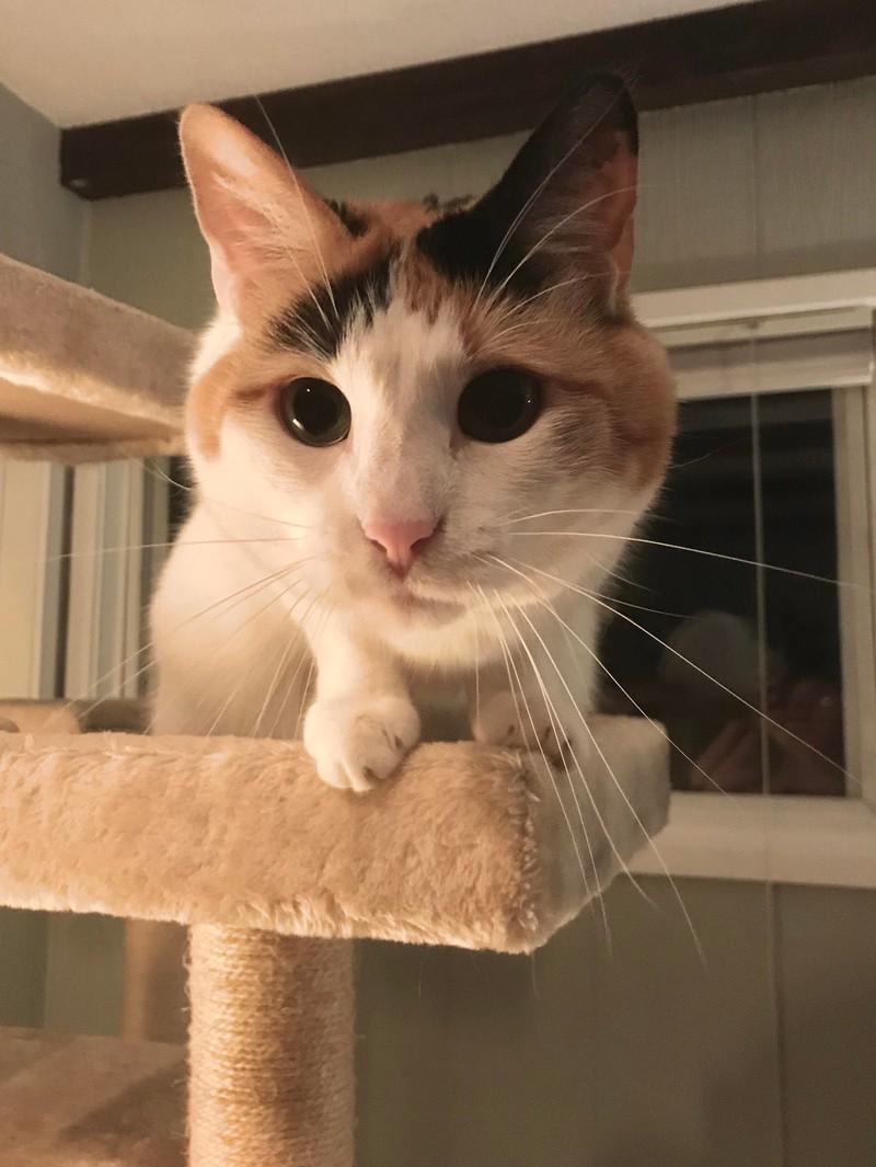Eine Katze schaut süß in die Kamera