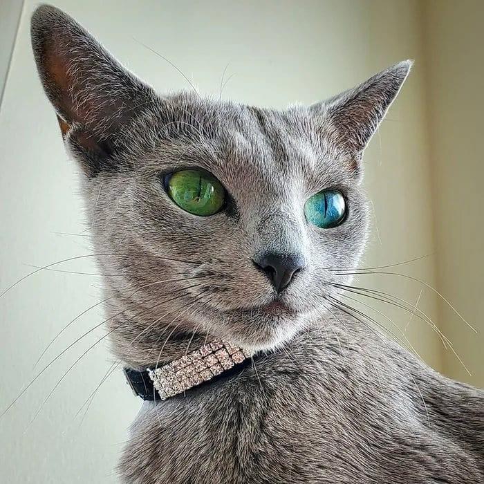 Katze hat leuchtenede Augen