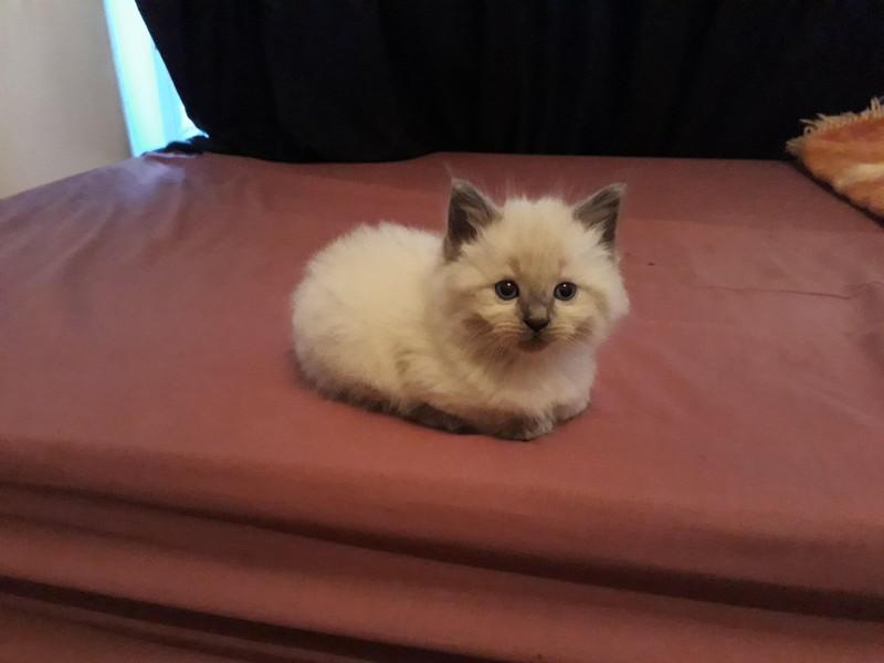 Katzenbild: Eine kleine Katze kuschelt auf einem Bett