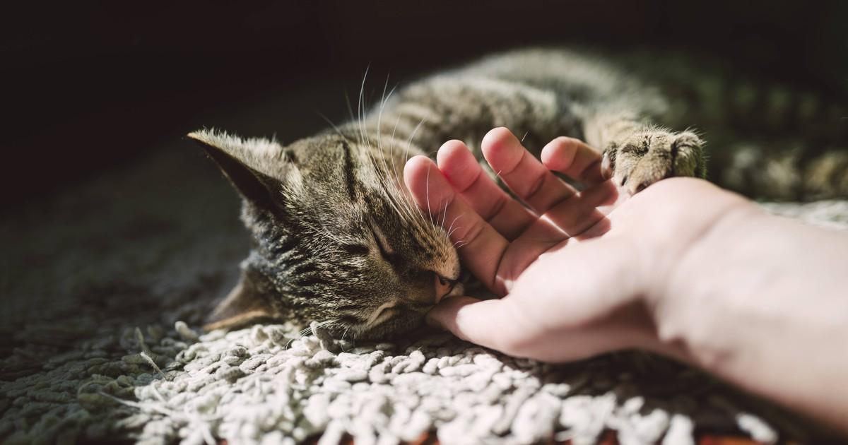 10 Anzeichen, an denen du erkennst, dass deine Katze dich liebt