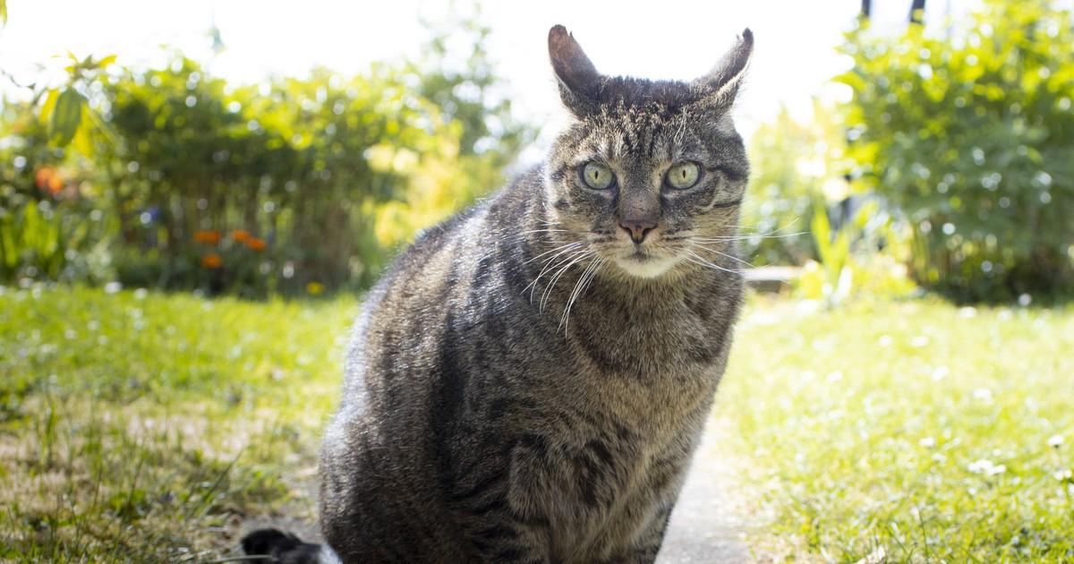 Deine Katze wird alt? 8 Dinge, die du wissen solltest