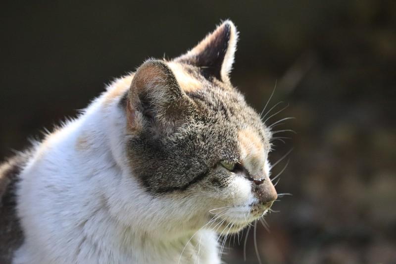 Das Verhalten von alten Katzen ändert sich