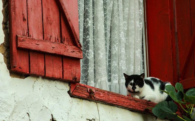 Die Lebenserwartung von Katzen hängt von verschiedenen Faktoren ab