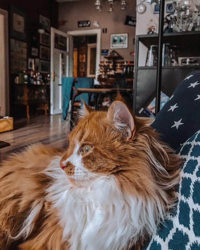 Katzen gelten ab 10 Jahren schon als alt