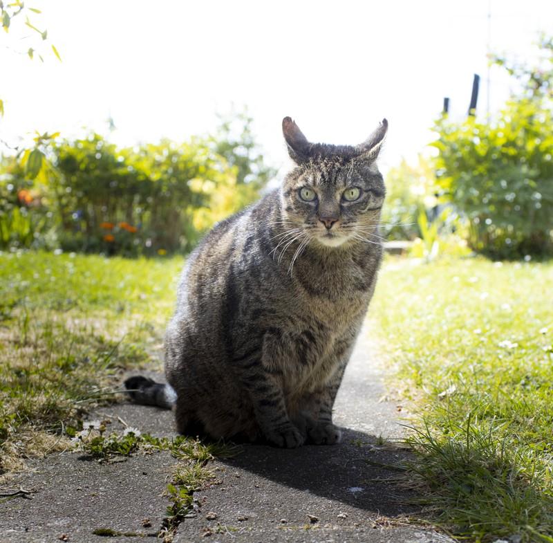 Man muss wissen, wie die Katze sich körperlich verändert, wenn sie alt wird.