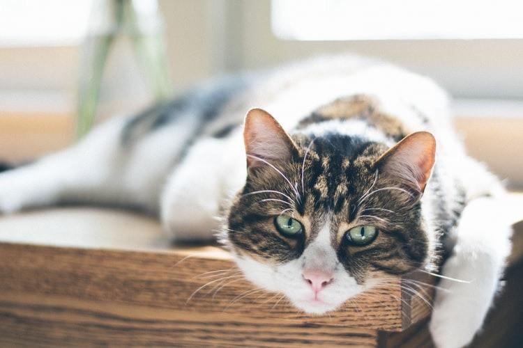 Wenn Katzen alt werden, muss man auf einiges achten.