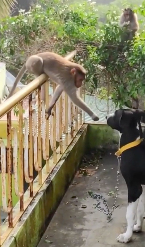Ein Hund freut sich über den Besuch seines Freundes, dem Affen.