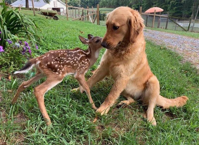 Ein Hund und ein Rentier haben eine ungewöhnliche Freundschaft.