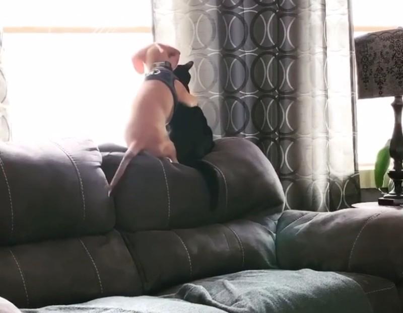 Ein Welpe und eine Katze schauen zusammen aus dem Fenster.