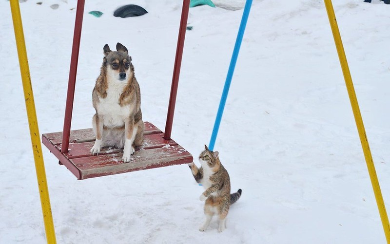 Eine Katze und ein Hund spielen merkwürdig, wenn auch süß zusammen auf einer Schaukel.