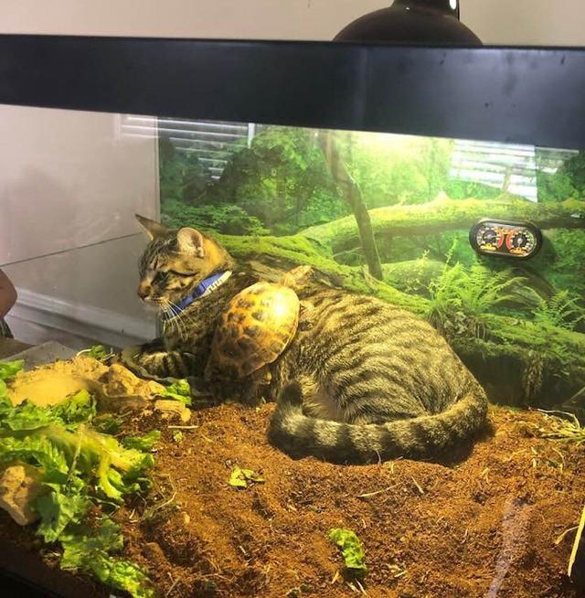 Eine Katze und eine Schildkröte entspannen gemeinsam in einem Terrarium.